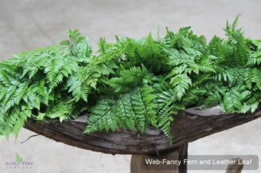 Fancy Fern and Leather leaf 8.95